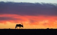 Desert adapted wildlife