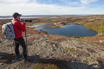 Caribou, Wolves & Northern Lights