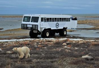 The Polar Bear Journey